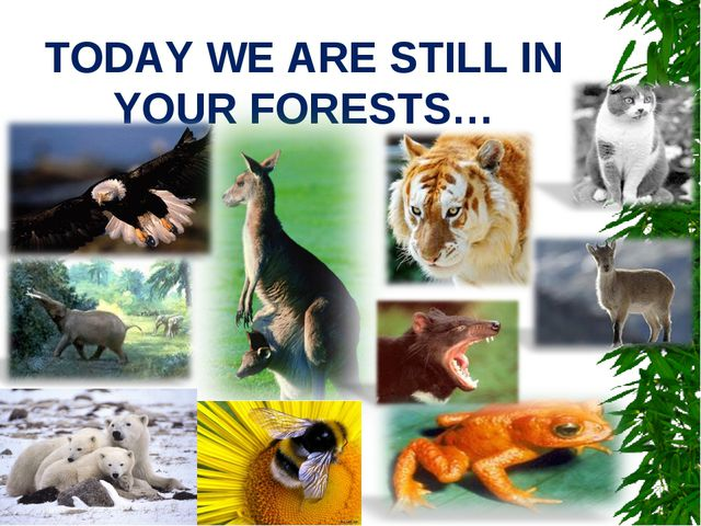 TODAY WE ARE STILL IN YOUR FORESTS…
