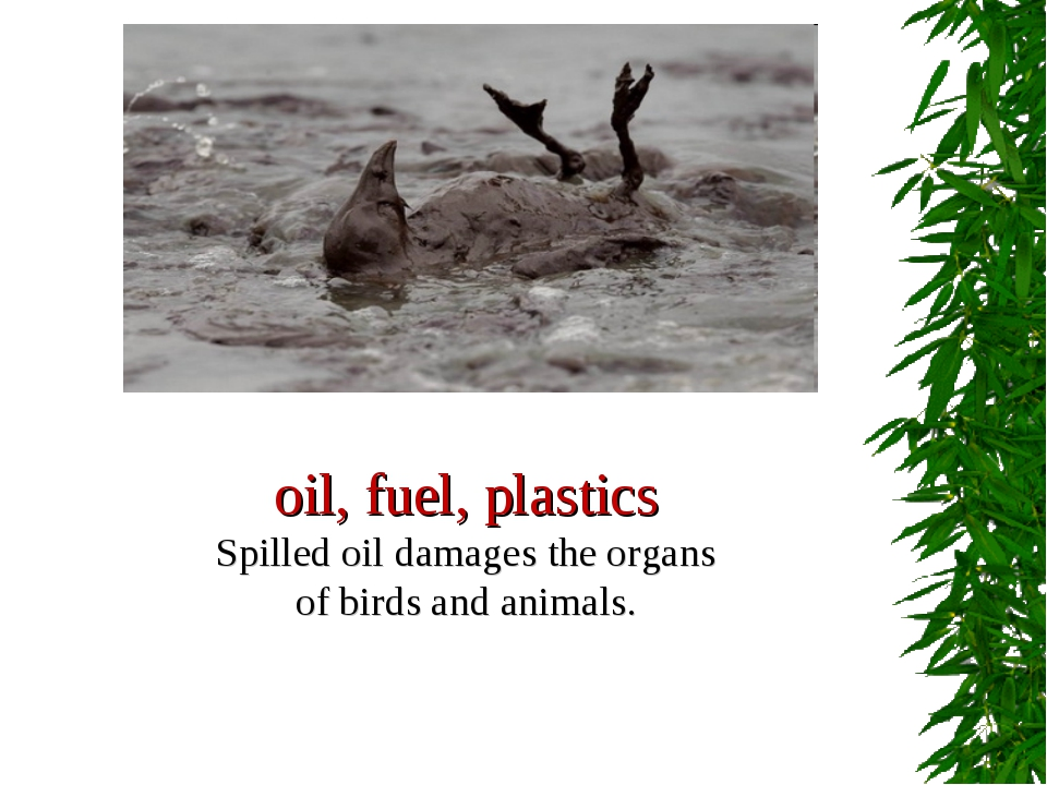 oil, fuel, plastics Spilled oil damages the organs of birds and animals.