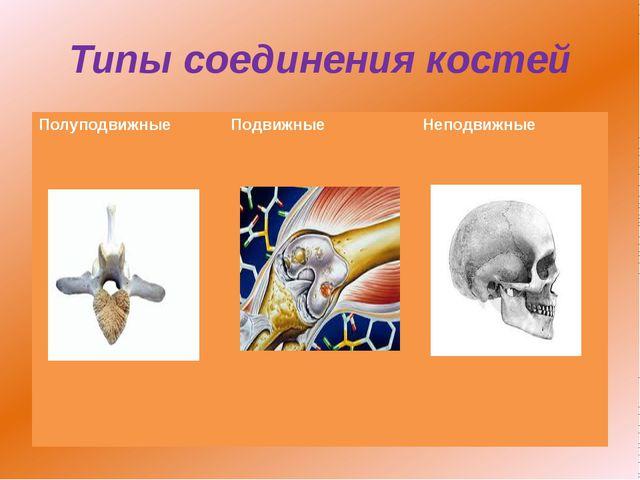 Типы соединения костей Полуподвижные Подвижные Неподвижные