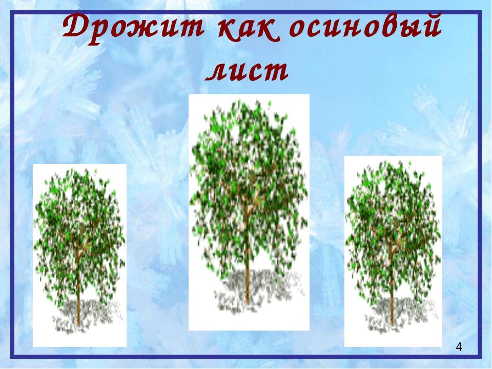 Дрожит как осиновый лист 4