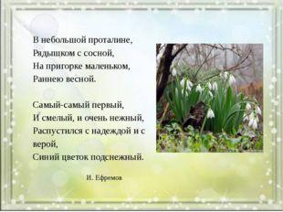 В небольшой проталине, Рядышком с сосной, На пригорке маленьком, Раннею весн