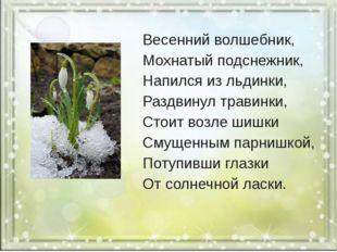 Весенний волшебник, Мохнатый подснежник, Напился из льдинки, Раздвинул трави