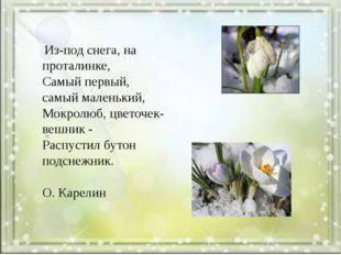 Из-под снега, на проталинке, Самый первый, самый маленький, Мокролюб, цветоч