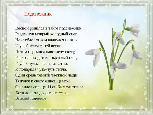 Подснежник Весной родился в тайге подснежник, Раздвинув мокрый холодный снег...