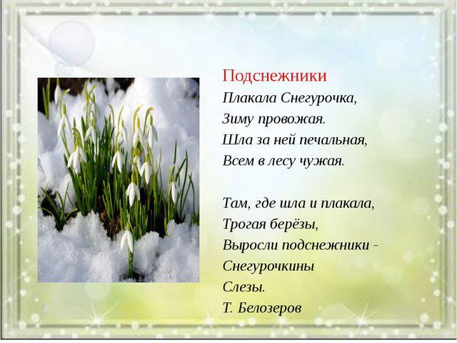 Подснежники Плакала Снегурочка, Зиму провожая. Шла за ней печальная, Всем в...