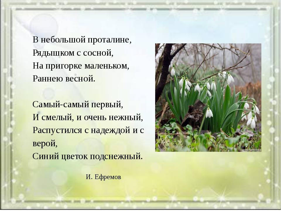 В небольшой проталине, Рядышком с сосной, На пригорке маленьком, Раннею весн...