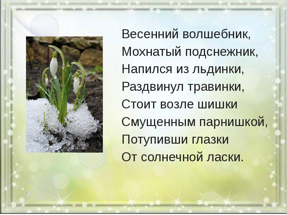 Весенний волшебник, Мохнатый подснежник, Напился из льдинки, Раздвинул трави...