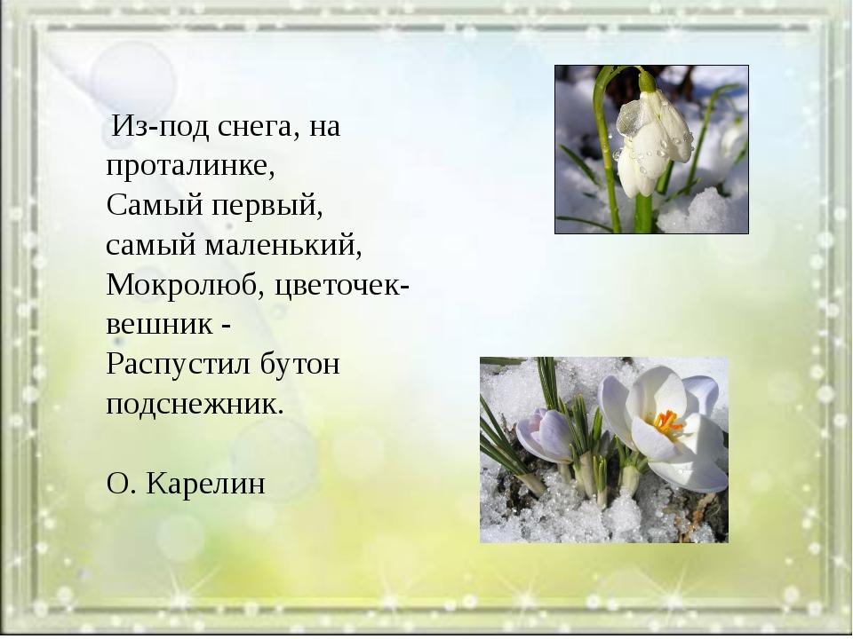 Из-под снега, на проталинке, Самый первый, самый маленький, Мокролюб, цветоч...