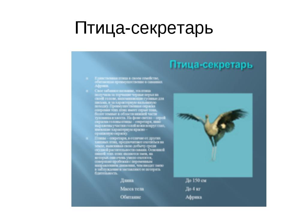 Птица-секретарь