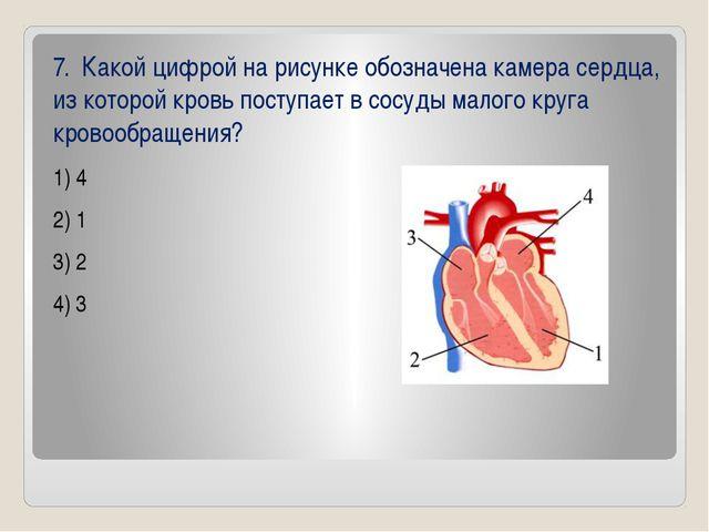 7. Какой цифрой на рисунке обозначена камера сердца, из которой кровь поступ...