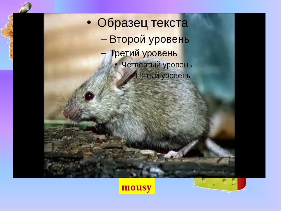 mousy