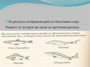 На рисунках изображена рыба из Васюткина озера. Укажите ту, которую вы знали