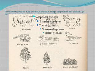 Рассмотрите рисунки. Какие таежные деревья, птицы, звери были вам знакомы до
