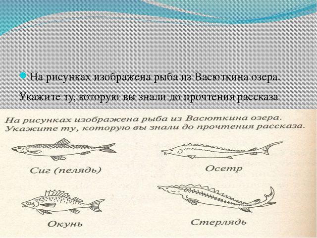 На рисунках изображена рыба из Васюткина озера. Укажите ту, которую вы знали...