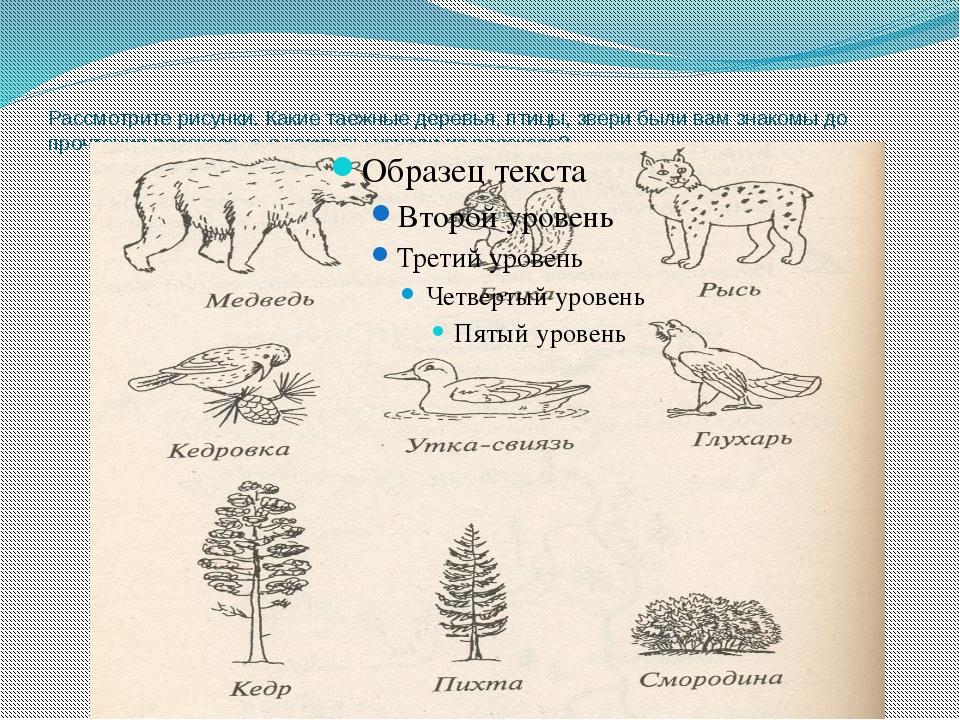 Рассмотрите рисунки. Какие таежные деревья, птицы, звери были вам знакомы до...