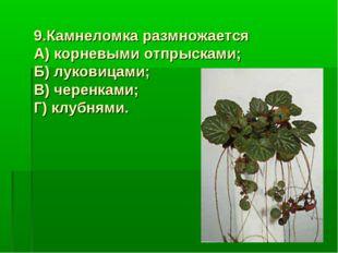 9.Камнеломка размножается А) корневыми отпрысками; Б) луковицами; В) черенкам
