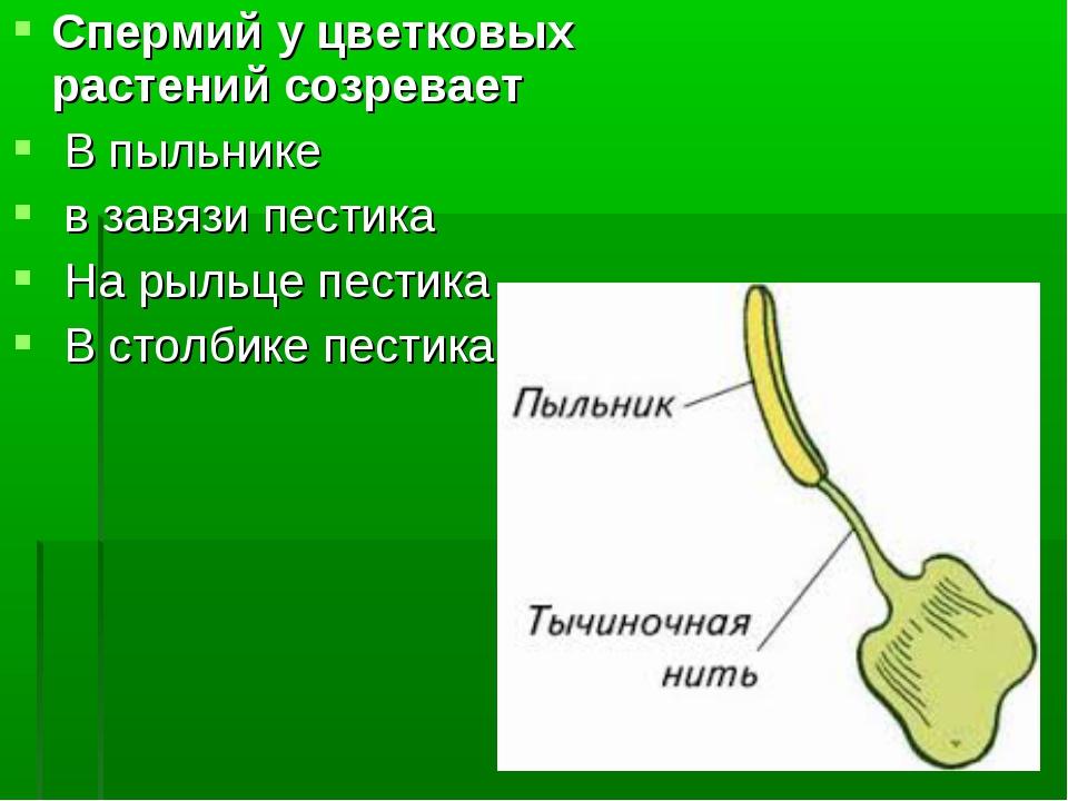 spermii-napravlyayutsya-k-pilniku