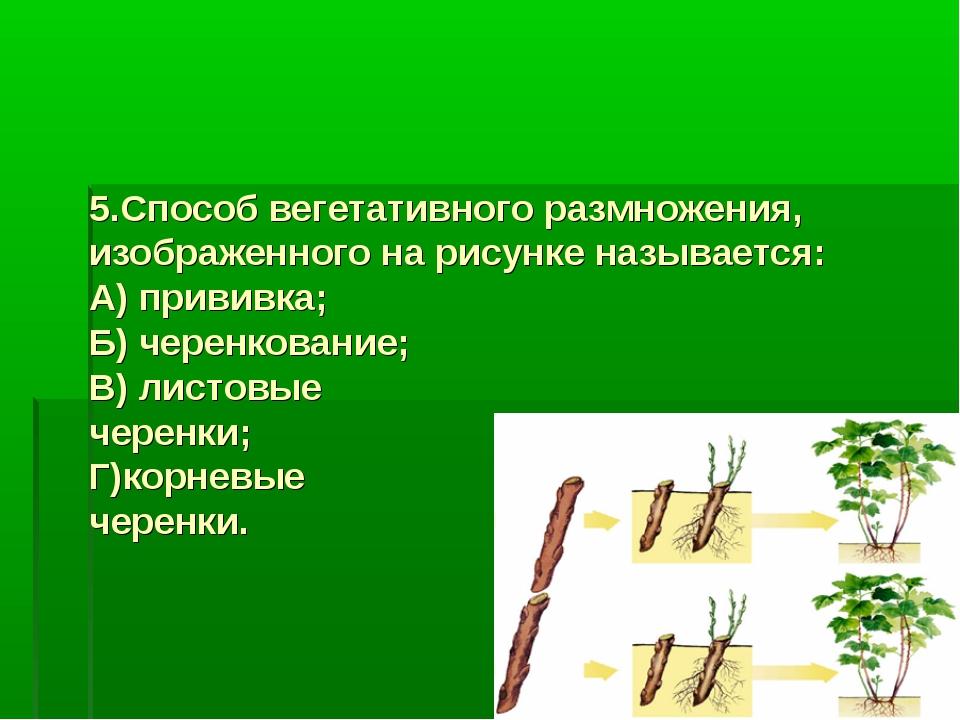 5.Способ вегетативного размножения, изображенного на рисунке называется: А) п...