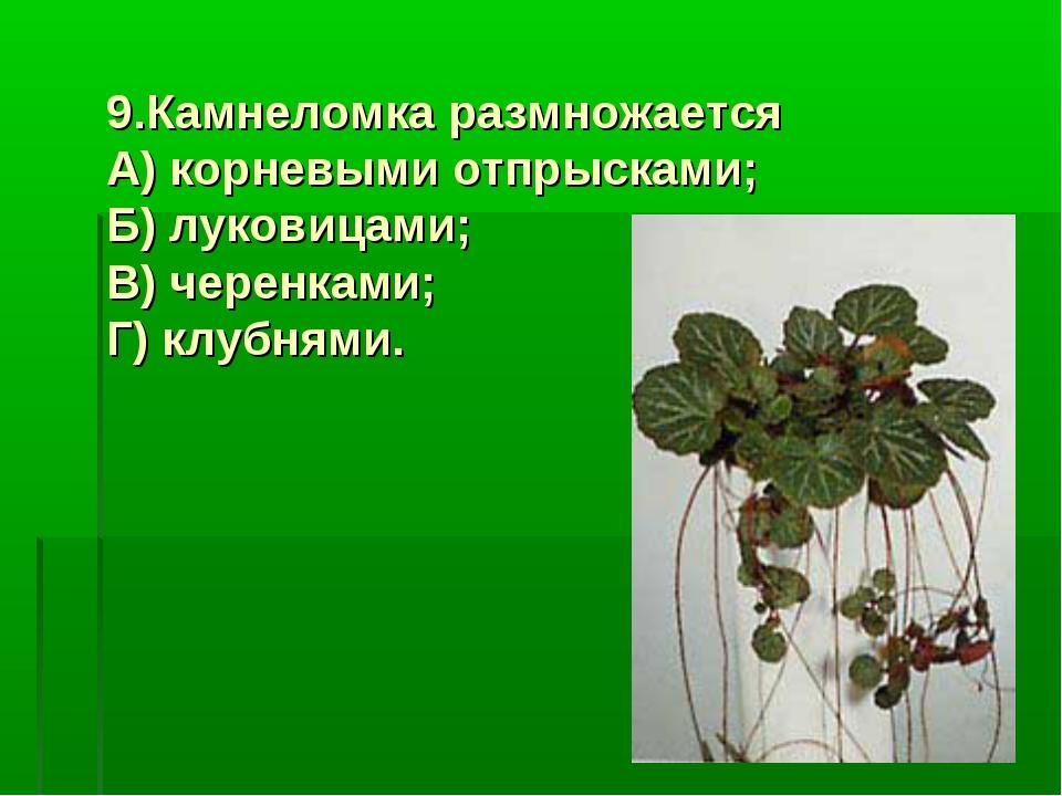 9.Камнеломка размножается А) корневыми отпрысками; Б) луковицами; В) черенкам...