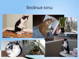 Весёлые коты