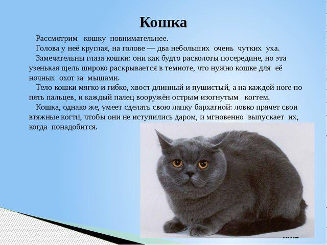 Кошка Рассмотрим кошку повнимательнее. Голова у неё круглая, на голове — два...