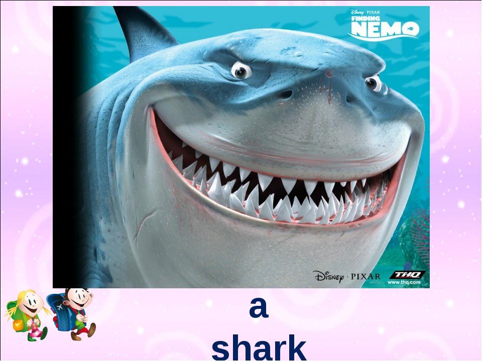 a shark 3,000 teeth