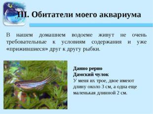III. Обитатели моего аквариума В нашем домашнем водоеме живут не очень требов