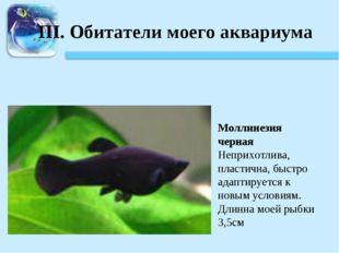 III. Обитатели моего аквариума Моллинезия черная Неприхотлива, пластична, быс