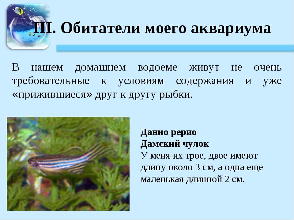 III. Обитатели моего аквариума В нашем домашнем водоеме живут не очень требов...