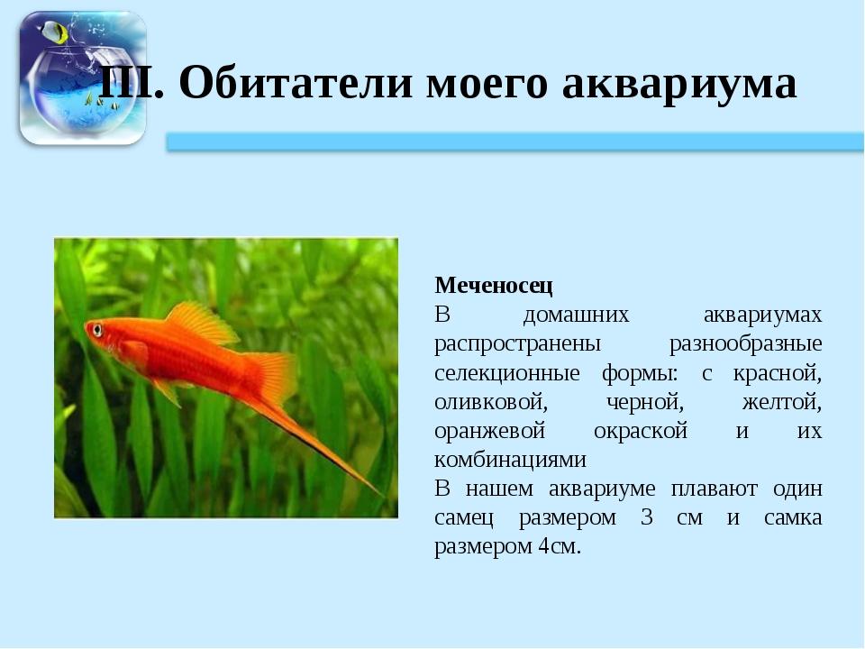 III. Обитатели моего аквариума Меченосец В домашних аквариумах распространены...