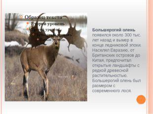 Большерогий олень появился около 300 тыс. лет назад и вымер в конце ледниково