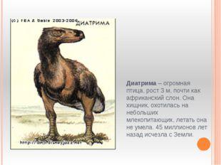 Диатрима – огромная птица, рост 3 м, почти как африканский слон. Она хищник,