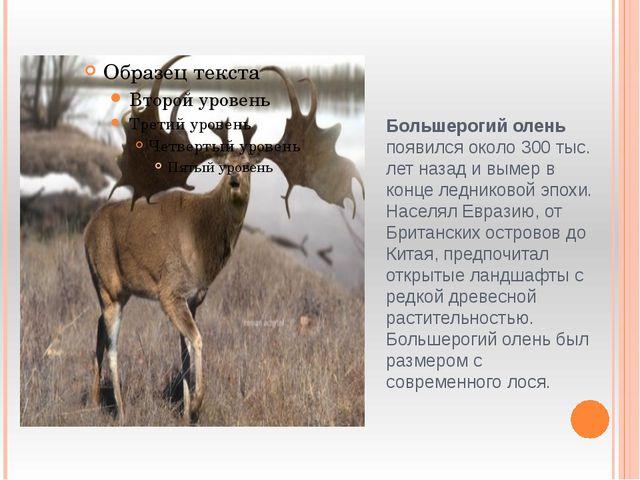 Большерогий олень появился около 300 тыс. лет назад и вымер в конце ледниково...