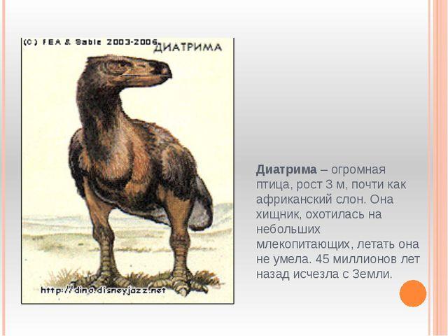 Диатрима – огромная птица, рост 3 м, почти как африканский слон. Она хищник,...