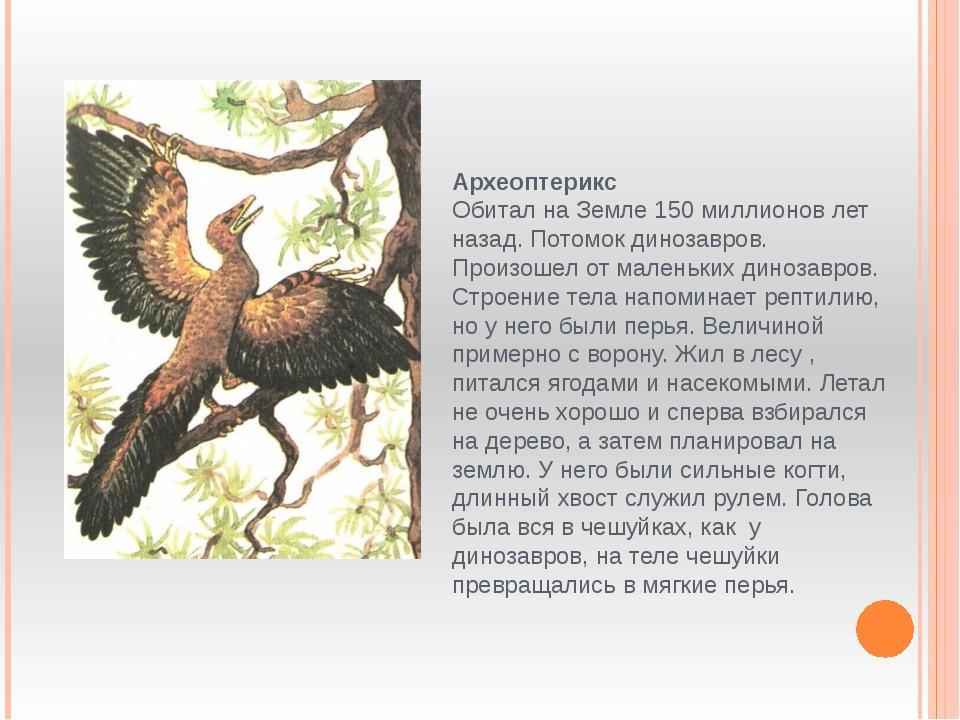 Археоптерикс Обитал на Земле 150 миллионов лет назад. Потомок динозавров. Про...