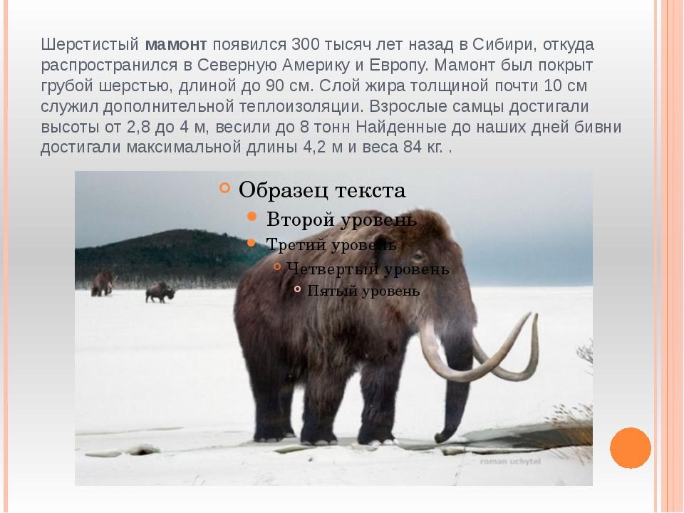 Шерстистый мамонт появился 300 тысяч лет назад в Сибири, откуда распространил...