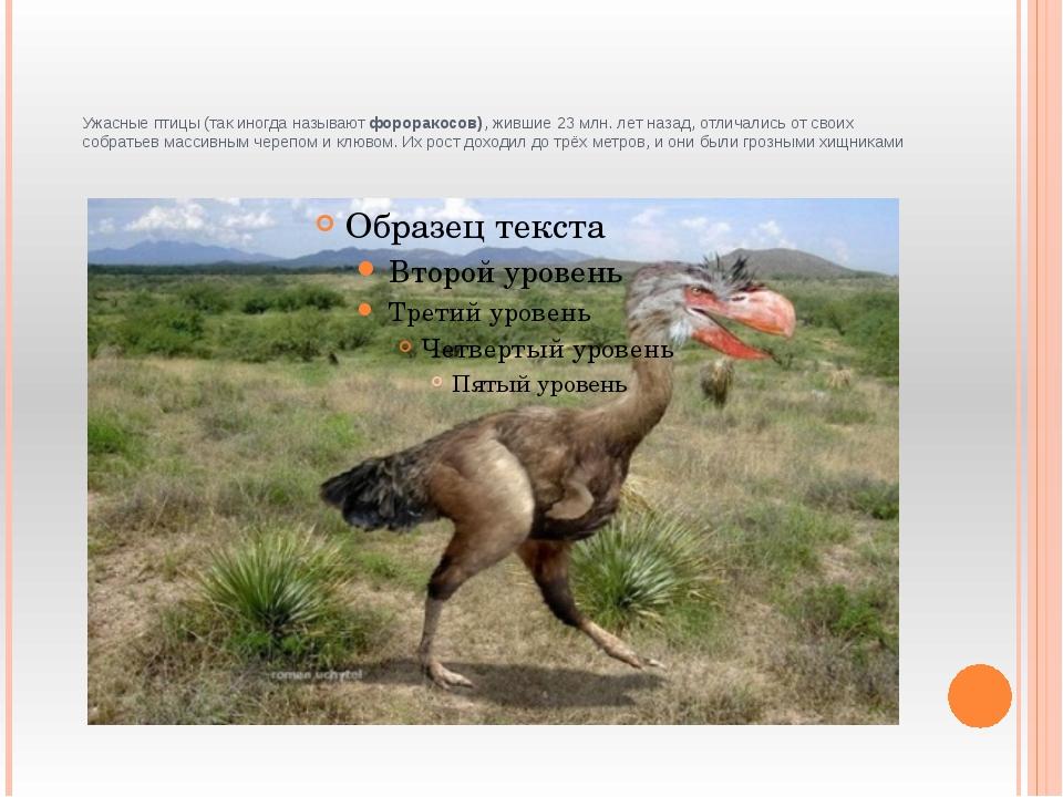 Ужасные птицы (так иногда называют фороракосов), жившие 23 млн. лет назад, о...