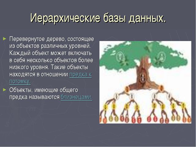 Иерархические базы данных. Перевернутое дерево, состоящее из объектов различн...