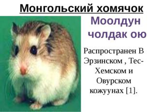 Монгольский хомячок Моолдун чолдак ою Распространен В Эрзинском , Тес-Хемском