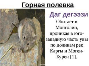 Горная полевка Даг дегээзи Обитает в Монголии, проникая в юго-западную часть