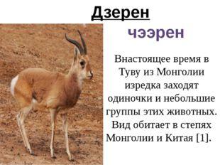 Дзерен чээрен Внастоящее время в Туву из Монголии изредка заходят одиночки и
