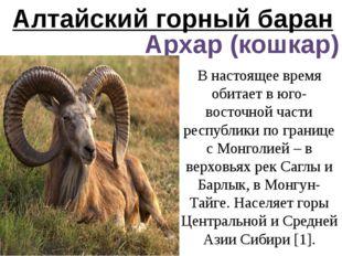 Алтайский горный баран Архар (кошкар) В настоящее время обитает в юго-восточн