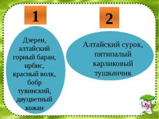1 2 Дзерен, алтайский горный баран, ирбис, красный волк, бобр тувинский, дву