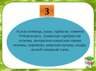 Усатая ночница, ушан, тарбаган, хомячок Роборовского, тувинская серебристая