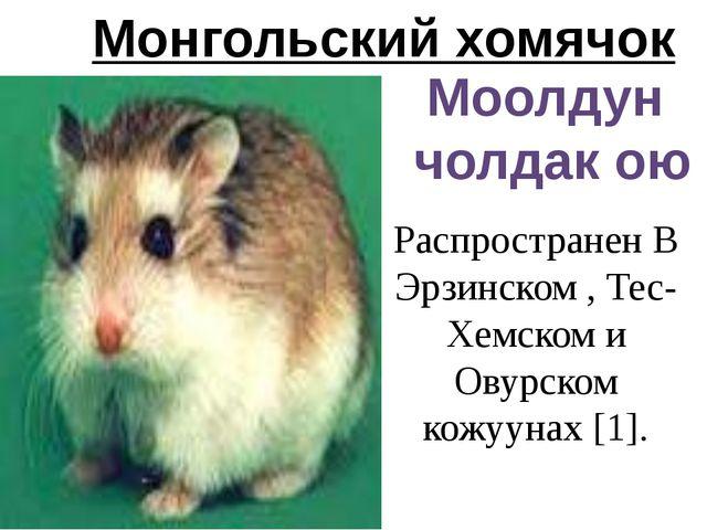 Монгольский хомячок Моолдун чолдак ою Распространен В Эрзинском , Тес-Хемском...