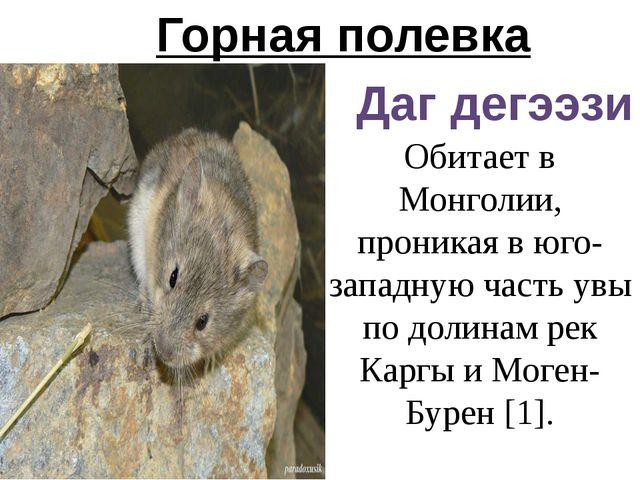 Горная полевка Даг дегээзи Обитает в Монголии, проникая в юго-западную часть...