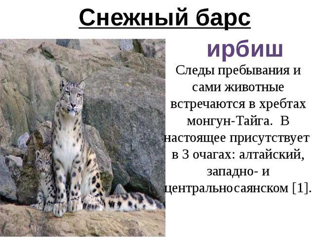 Снежный барс ирбиш Следы пребывания и сами животные встречаются в хребтах мон...