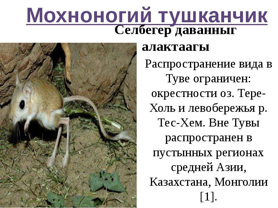 Мохноногий тушканчик Селбегер даванныг алактаагы Распространение вида в Туве...
