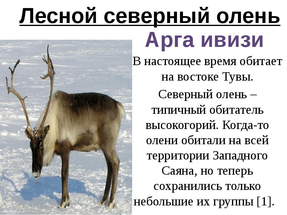 Лесной северный олень Арга ивизи В настоящее время обитает на востоке Тувы. С...