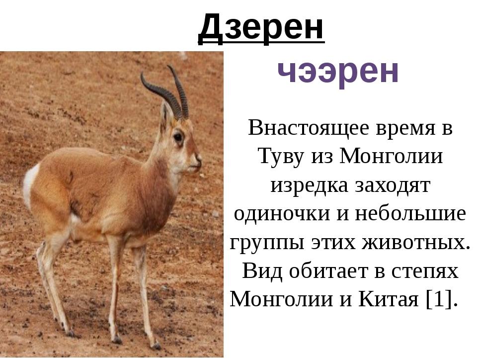 Дзерен чээрен Внастоящее время в Туву из Монголии изредка заходят одиночки и...